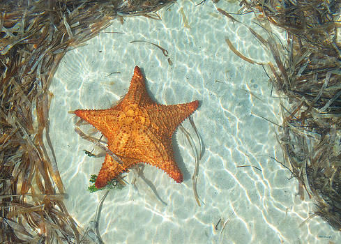 Starfish 2 of Bottom Harbour Sound by Duane McCullough