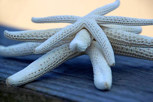 Carolyn Stagger Cokley - Starfish 3235