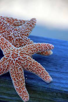 Carolyn Stagger Cokley - Starfish 3257