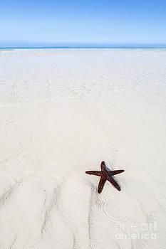 Starfish Beach by Scott Kerrigan