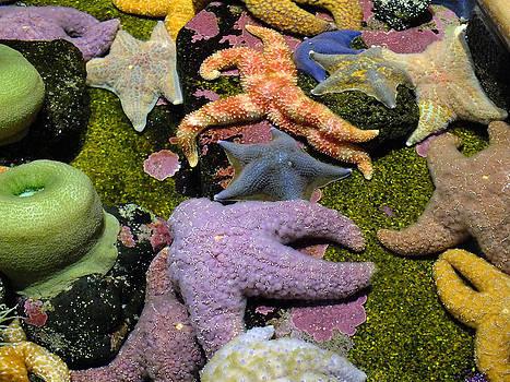 Starfish Dance by Wendy McKennon