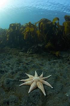 Starfish. by Erlendur Gudmundsson
