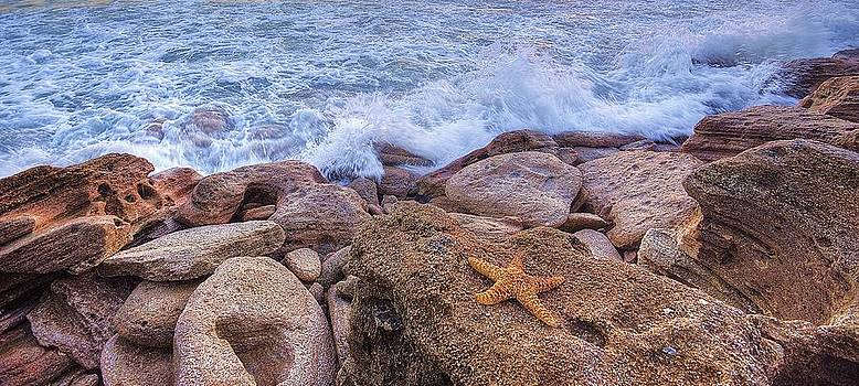 Starfish on the Rocks by DM Photography- Dan Mongosa