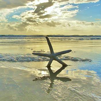 Starfish Sunrise Shine by DM Photography- Dan Mongosa