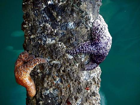 Starfish Under the Pier by Kathy Churchman