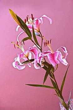 Byron Varvarigos - Stargazer Lilies rectangular frame
