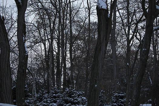 Stark Winter by Stacie  Goodloe