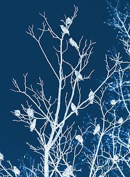 Starlings In Tree II by Photo Captures by Jeffery
