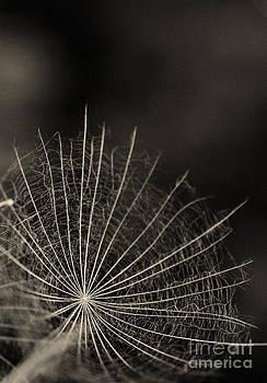 Stars by Bajan Sorin