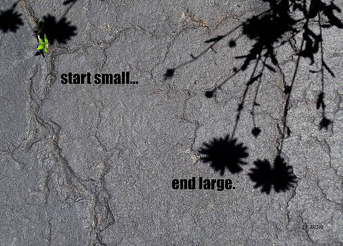 Start Small...end Large by J R Baldini M Photog CR