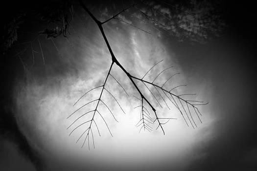 State Of Mind by Dorit Fuhg