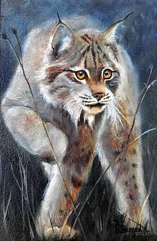 Stealthy Hunter - Canada Lynx by Pamela Bergen