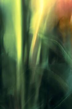 Stem Blur by Janice Sullivan