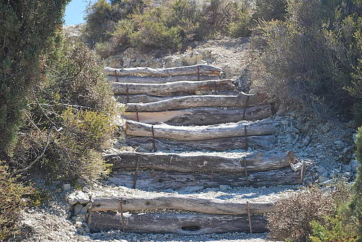 Steps In The Woods by George Katechis
