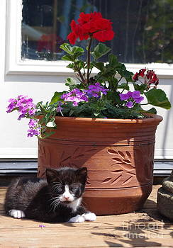 Tannis  Baldwin - Still Life Kitty