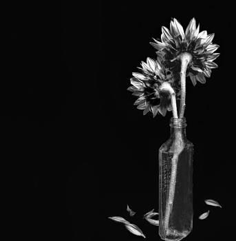 Still Life by Nancie Rowan