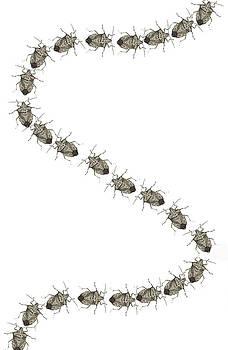 Stink Bugs I phone case by R  Allen Swezey
