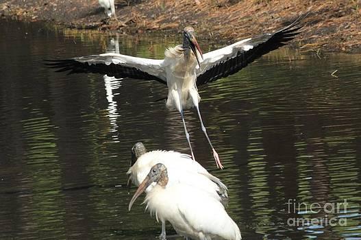Stork Landing by Theresa Willingham