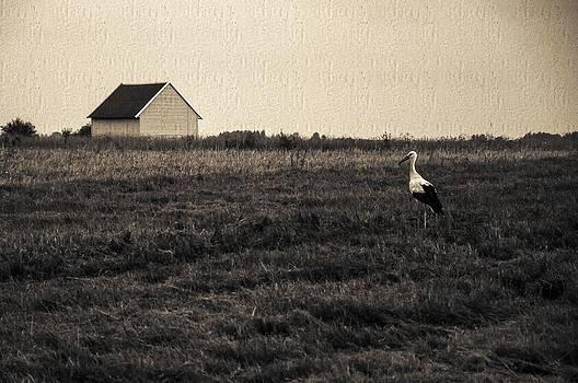 Stork's tale by Yevgeni Kacnelson