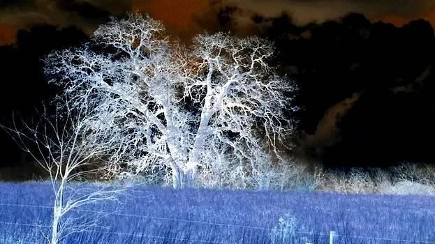 Storm by Kendra Sorum