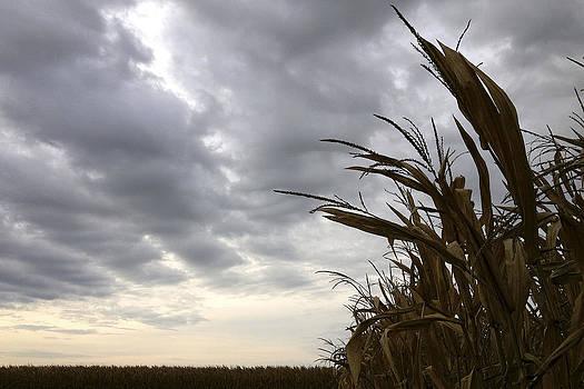 Stormy Corn by Daniel Kasztelan