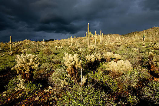 Stormy Desert by David  Forster