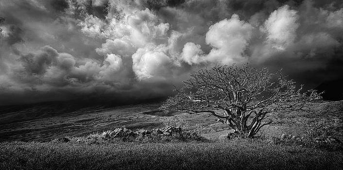 Stormy Sky Lone Tree by Paul Bartell
