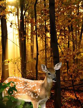 Randall Branham - Storybook Bambi Photo