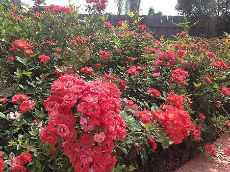 Storybook Roses by Diane Ferguson