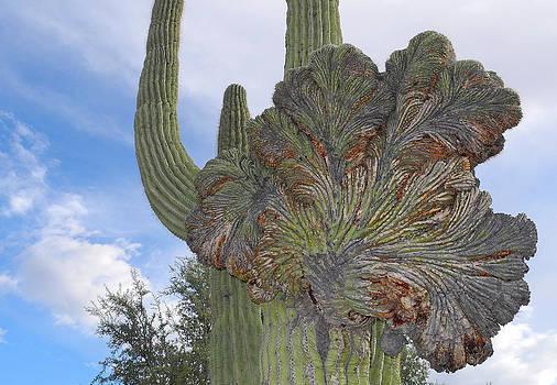 Lynda Lehmann - Strange Saguaro Crest