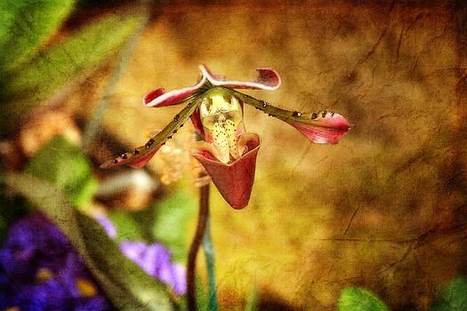 Stranger in the Garden by Joan Bertucci