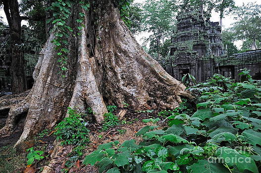 Strangler fig tree roots on the ancient Preah Khan Temple by Sami Sarkis