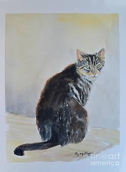 Stray Cat by Betty Mulligan