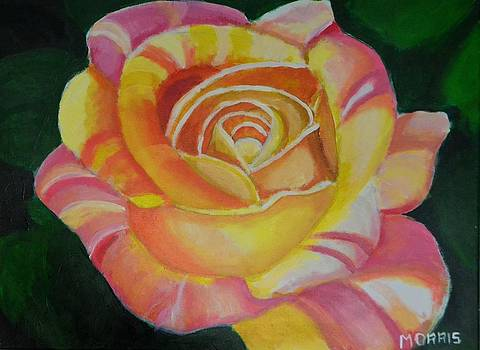 Striped Rose Yellow by P Dwain Morris
