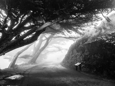 Stroll in the fog by Valeria Donaldson