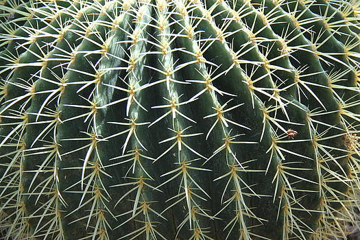 Studies on Cacti #2 by Sue  Thomson