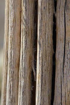 Studies on Cacti #4 by Sue  Thomson