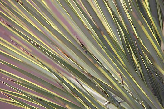 Studies on Cacti #6 by Sue  Thomson