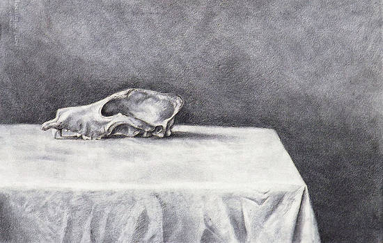 Study of Canine skull by Julianna Wells