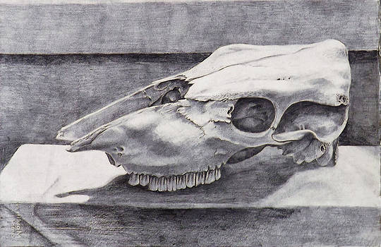 Study of Cow Skull by Julianna Wells