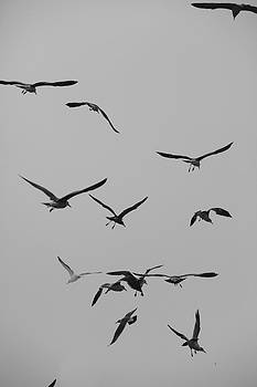 Study of Flight by Mark DeJohn