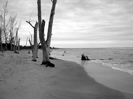 Stump Pass Beach by Barry Miller