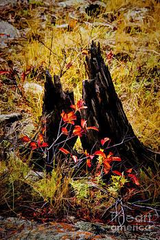 Jon Burch Photography - Stumpy