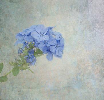 Kim Hojnacki - Subtle Blues