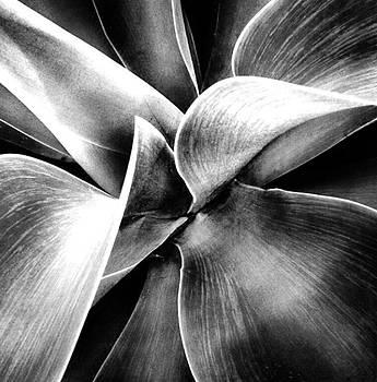 Succulent Curves  by Natalya Karavay