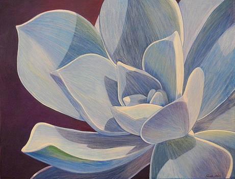 Succulent Plant by Adel Nemeth