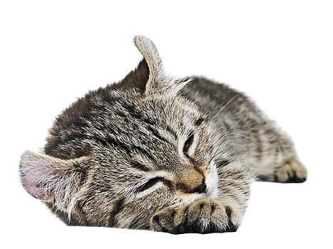 Such a Sleepy Kitten by Susan Leggett