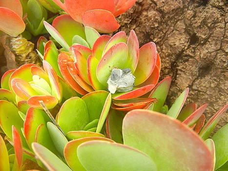 Suess Landing Cactus by Bess Yearsley