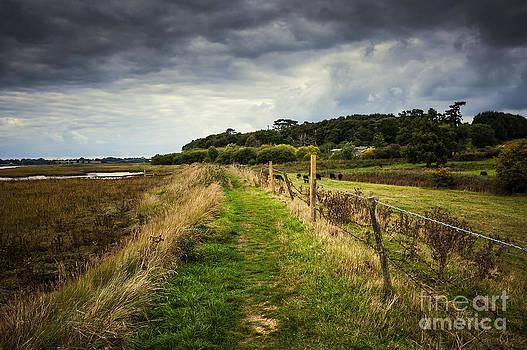 Svetlana Sewell - Suffolk Landscape