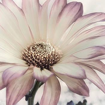 Sugarplum Frost by Darlene Kwiatkowski